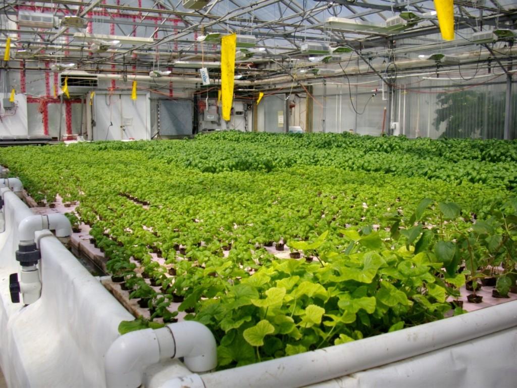 hydroponics equipment